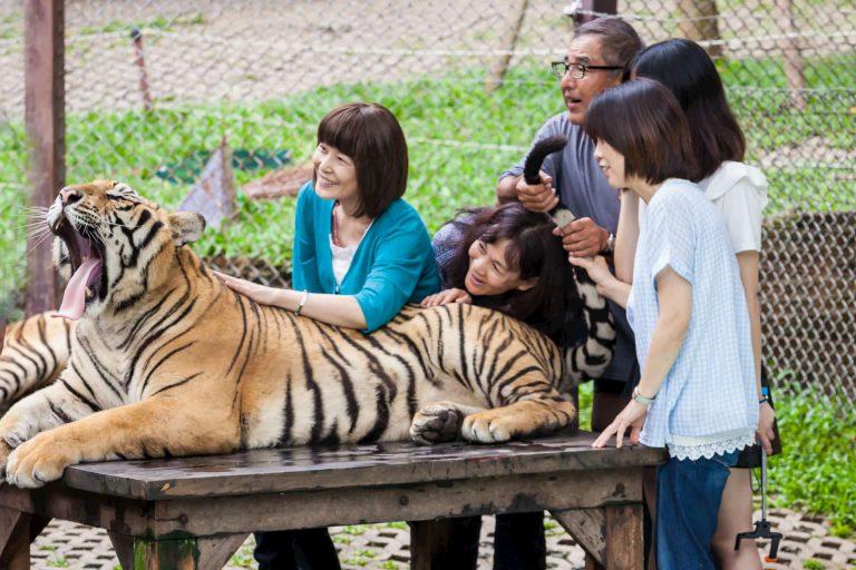 Tiger Kingdom Phuket island