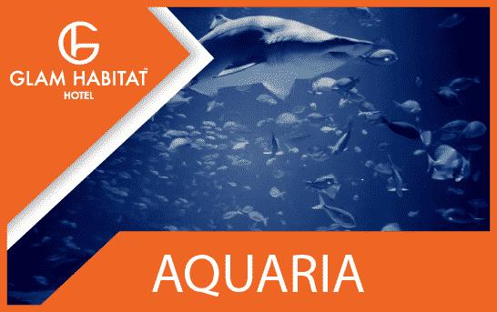 Aquaria Phuket Feature